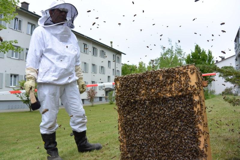 Der Feuerwehrmann hat soeben einen grossen Bienenschwarm eingefangen.