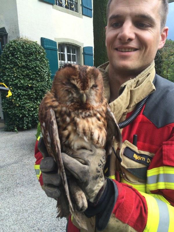 Feuerwehrmann in Schutzhandschuhen hält den geretteten Waldkauz in den Händen.