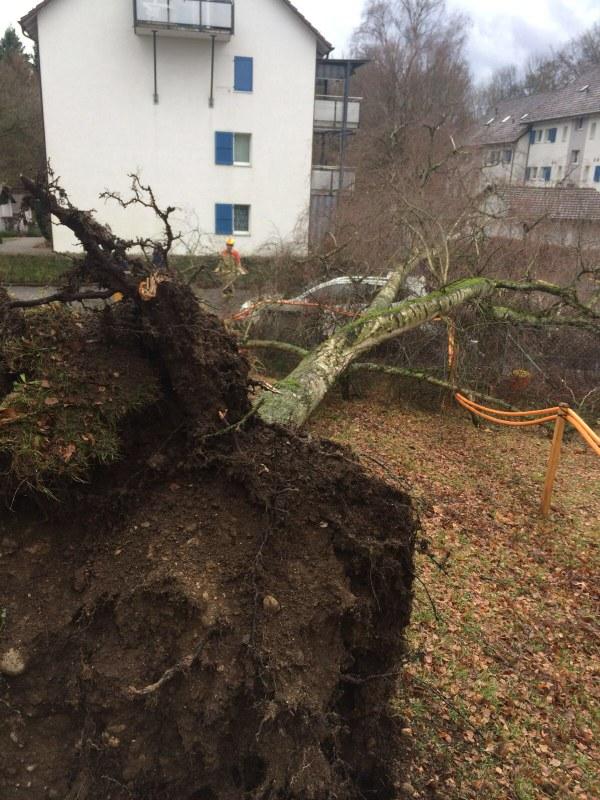 Ein grosser Baum hat ein Auto unter sich begraben. Ein Feuerwehrmann analysiert die Situation.
