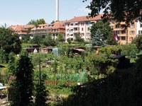 Bild Areal Mutachstrasse
