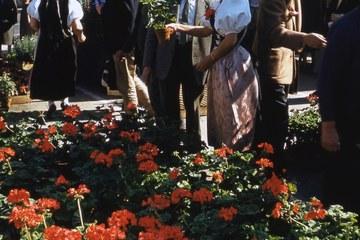 Bild 3 Granium Verkauf am Graniummärit 1959, Foto Stadtgrün Bern (JPG, 2,9 MB). Vergrösserte Ansicht