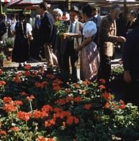 Bild 3 Granium Verkauf am Graniummärit 1959, Foto Stadtgrün Bern