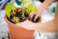7 PflanzBar bald gemischter Salat Bild Pascale Amez