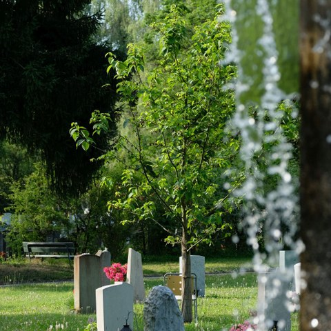 Gräber auf dem Friedhof Bümpliz.. Vergrösserte Ansicht