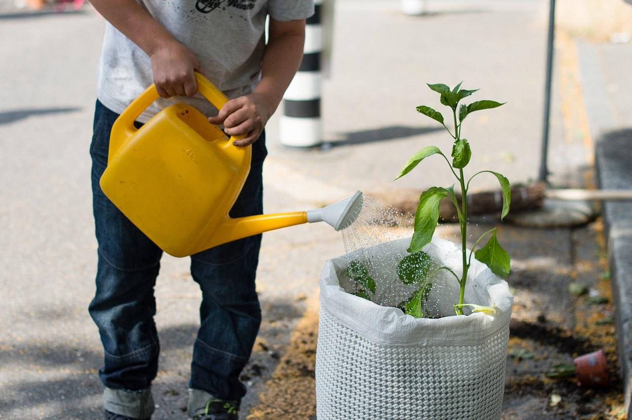 Ein Mann giesst eine Sonnenblume in einem Topf.