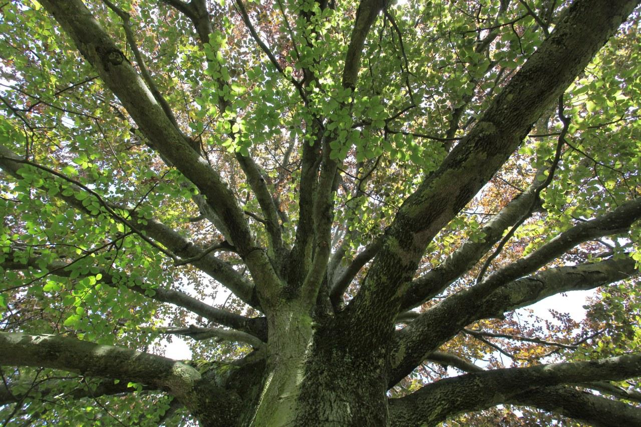 Bild eines Baumes.