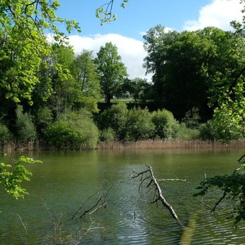 Elfenau-Reservat. Vergrösserte Ansicht